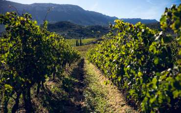 L'enoturismo riuscirà a far volare la Sardegna?