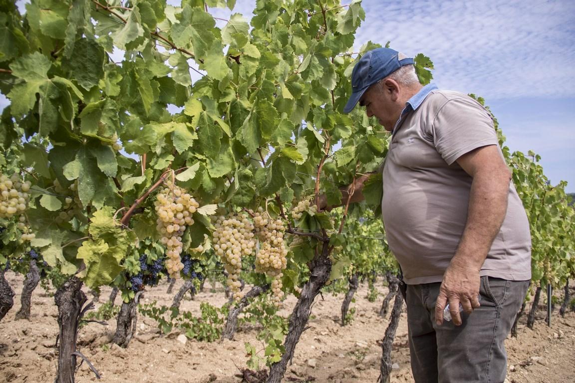 Al Wine2Wine un focus sui vini autoctoni